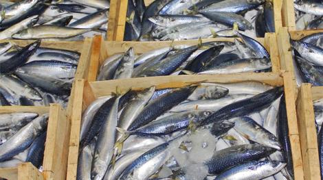 Wooden boxes full of fish , full frame.